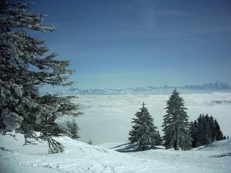 Lelex_hiver4