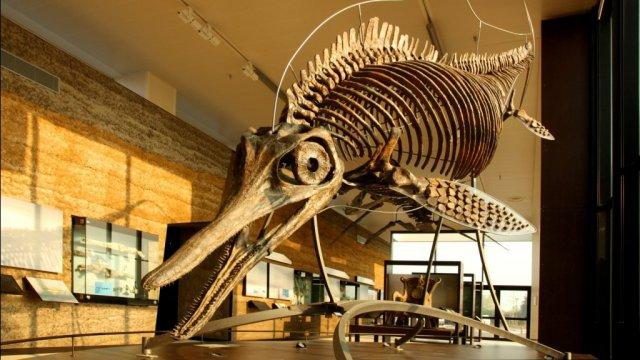 Le Paléospace: plongez dans le jurassique, il y a 160 millions d'années, à l'époque des grandsprédateurs!