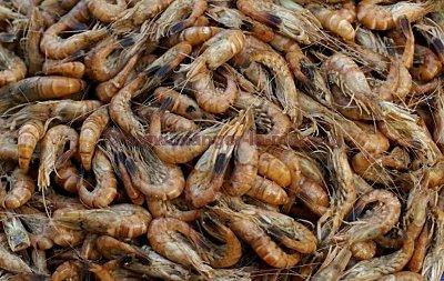 La fête de la crevette grise à Honfleur les 8 et 9 Octobre2016